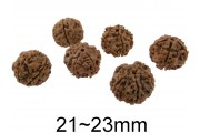 https://www.multemargele.ro/37440-jqzoom_default/rudraksha-natural.jpg